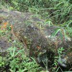 Batu gajah - Katak Raksasa